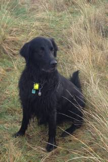 The Levine Family grove