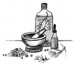 Drawing of juniper drink preparation
