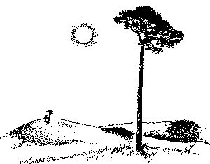 Drawing of Scots pine tree