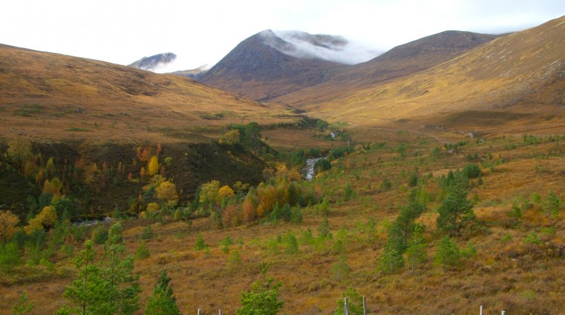 Young trees in Glen Affric