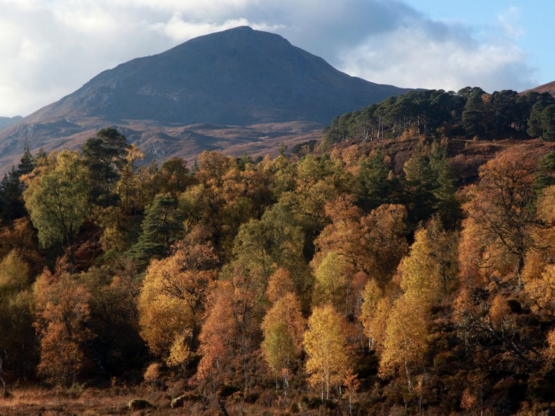 IMG_4723 Scots pines and birches in autumn, with the peak of Sgurr na Lapaich
