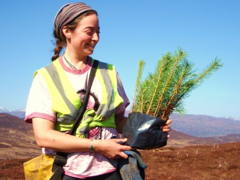 A volunteer with young Scots pines for planting at Corrimony.