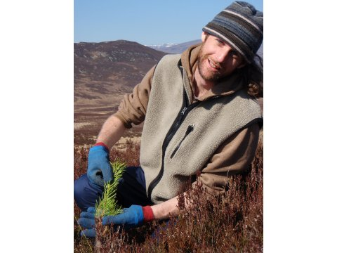 A volunteer with a newly planted Scots pine seedling at Corrimony.