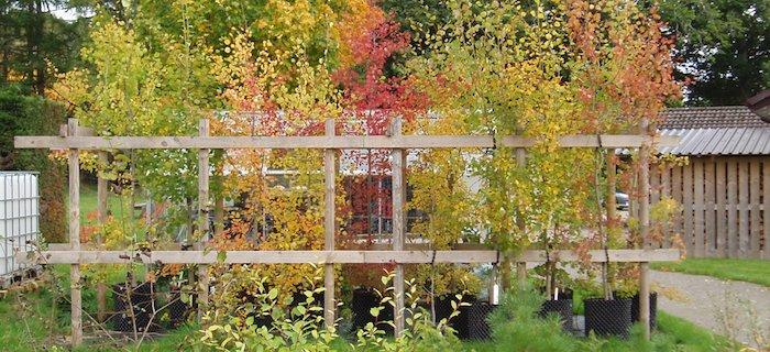 Tree nursery dundreggan trees for life