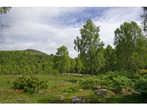 Dundreggan is a 10,000 Conservation Estate set in beautiful Glen Moriston, near Loch Ness.
