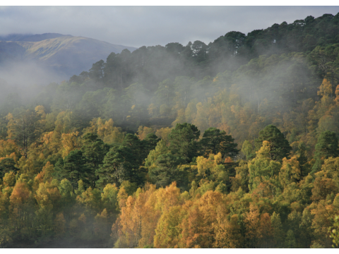 Early morning fog clearing over Glen Affric's forests, with aspen and birch in their glorious autumnal colours.