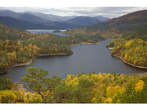 Glen Affric has one of the largest remaining fragments of Caledonian Forest, set amongst a sea of beautiful lochs.