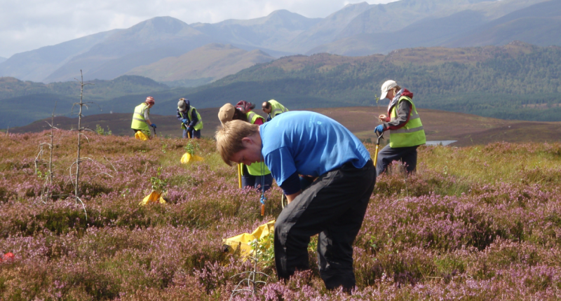 Tree planting to restore the Caledonian Forest