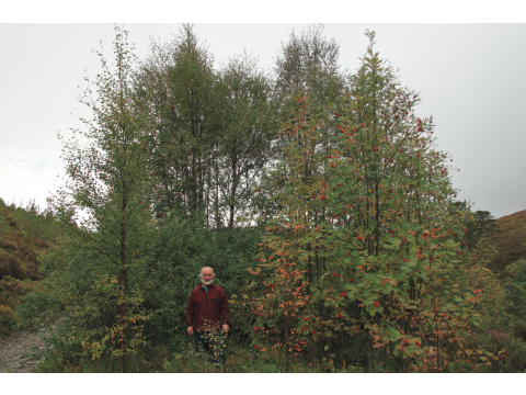 Trees for Life's Founder, Alan Watson Featherstone, beside a group of naturally-regenerating birches, rowans and eared willows in Meallan in October 2009.
