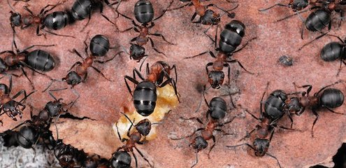 Wood ant | Trees for Life