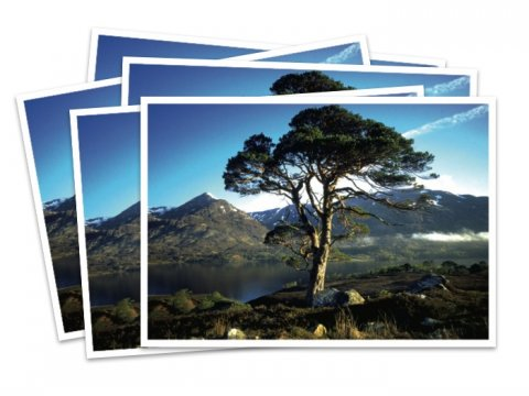 Trees for Life postcards