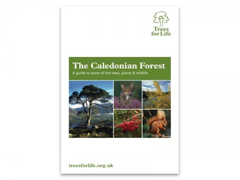 The Caledonian Forest - A guide to some of the trees, plants & wildlife