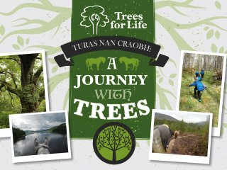 A journey with trees poster2