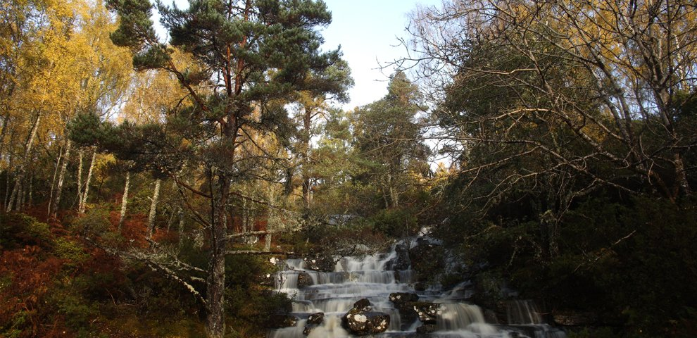 Rewilding Dundreggan @ Dundreggan Conservation Estate | Dundreggan | Scotland | United Kingdom