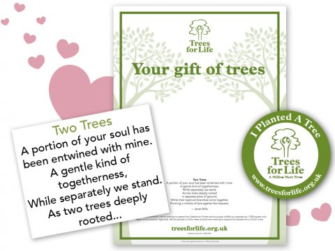 'In Love' tree certificate<BR><BR><b>From &pound;15</b>