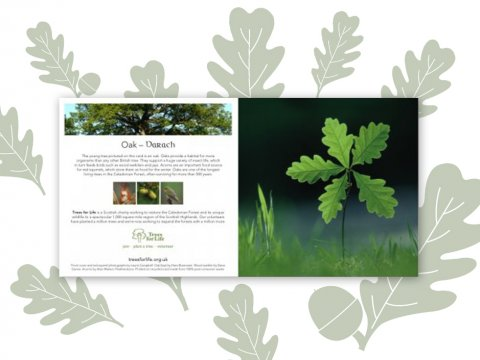 Plant a Tree gift card (Oak)
