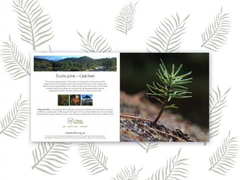 Plant a Tree gift card (Scots pine)- Free delivery