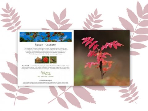 Plant a Tree gift card (Rowan)- Free delivery
