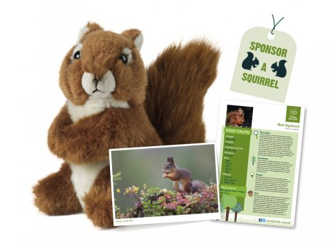 Sponsor a Squirrel gift pack