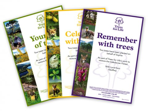 Dedicate a Tree gift certificates<BR><BR><b>From &pound;15</b>