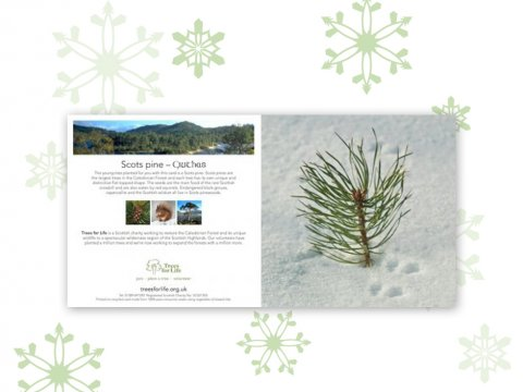 Plant a Tree gift card (Winter)
