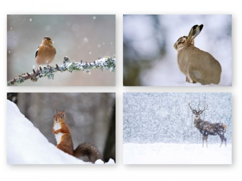 Winter Wildlife cards