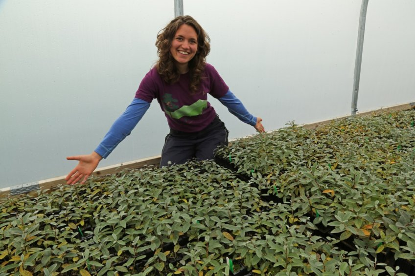 Our Nursery Assistant, Emma Beckinsale, with some of the 8,000 downy willow seedlings in our nursery.