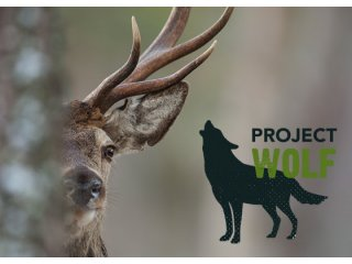 Project wolf logo