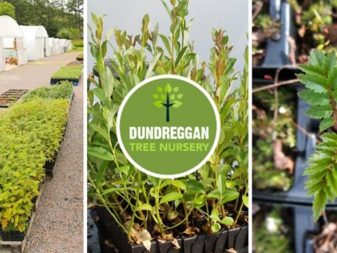 dundreggan tree nursery