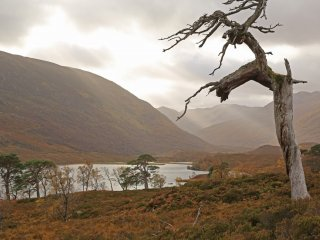 IMG_0525 Dead Scots pine, or snag, silhouetted against shafts of sunlight over Gleann na Ciche & Loch Affric#2