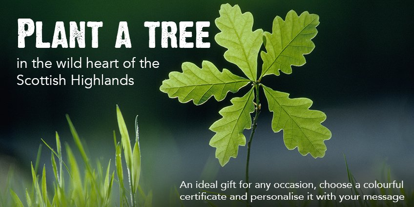 plant a tree new 2018 web sliders