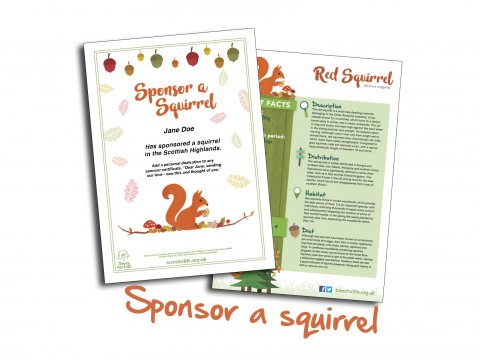Sponsor a red squirrel