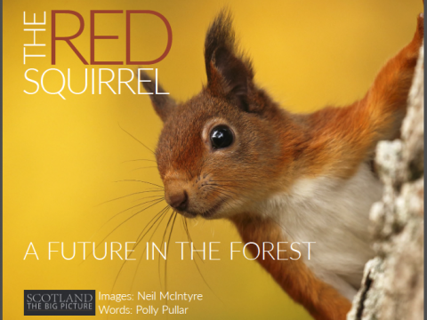 The Red Squirrel: A future in the forest (eBook)