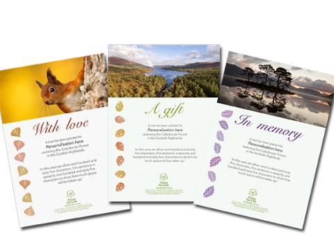 Dedicate a Tree gift certificates<BR><BR><b>From £17.99</b>