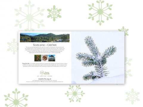 Plant a Tree gift card (Winter) - Free delivery
