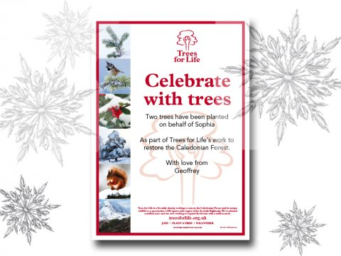 Christmas Tree gift certificates<BR><BR><b>From &pound;15</b>