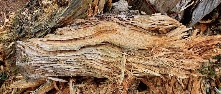 Decomposition and decay | Trees for Life