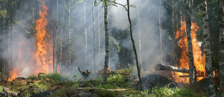 Natural Disturbance Trees For Life