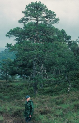 George Watson at Coille Ruigh in Glen Affric in 1990.